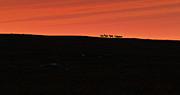 Pekka Sammallahti - Reindeer in the Sunset
