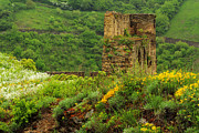 Rhine Valley Posters - Reinfels Castle Ruins and Wildflowers in the Rhine River Valley 1 Poster by Greg Matchick