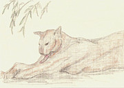 Panther Drawings - Relaxing Panther by Rosalie Scanlon