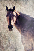 Quarter Horses Photo Posters - Reliability Poster by Betty LaRue