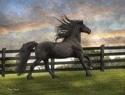 Friesian Acrylic Prints - Remains of the Day Acrylic Print by Fran J Scott