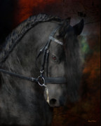 Friesian Photo Posters - Rembrandt  Poster by Fran J Scott