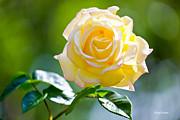 Michelle Wiarda - Remember Me