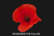 Paul Scoullar - Remember the fallen