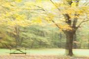 Karol  Livote - Remembering Autumn