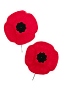 Lapel Photo Posters - Remembrance Day poppies Poster by Elena Elisseeva