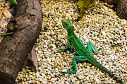 Reptile Photos - Reptiles by Christoph Caina