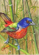 Handcrafted Drawings - Resplendent Painted Bunting by Carol Wisniewski
