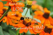 Rest In The Lord Print by Barbara Stellwagen