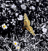 Brian Tobin - Resting Butterfly