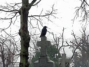 Graveyard Digital Art - Resting Crow by Gothicolors And Crows