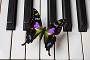 Butterfly Photo Posters - Resting on the piano Poster by Garry Gay
