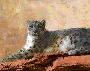 Cheetah Digital Art - Resting Snow Leopard by Roger D Hale