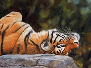 Animal Art Prints - Resting Tiger Painting Print by David Stribbling