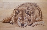 Legend  Pyrography - Resting wolf by Manon  Massari