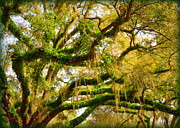 Epiphyte Metal Prints - Resurrection Fern Metal Print by Carla Parris