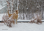 Winter Scene Digital Art Prints - Retriever And Fresh Snowfall Print by Gerald Marella