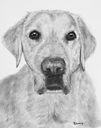 Lab Puppy Posters - Retriever Lab Drawing Poster by Kate Sumners