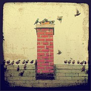 Rooftop Digital Art Prints - Retro Birds Print by Gothicolors And Crows