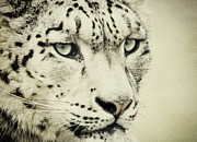 Chris Boulton - Retro Snow Leopard
