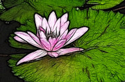 Water Lilly Prints - Retro Water Lilly Print by Bob Christopher