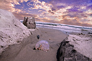 Topsail Island Prints - Returning Home Print by Betsy A Cutler East Coast Barrier Islands