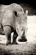 Rhino After The Rain Print by Mike Gaudaur
