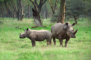 African Photos - Rhino Family by Sebastian Musial