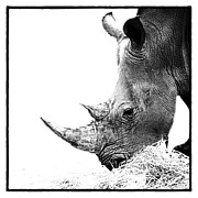Rhinoceros Photo Posters - Rhino Poster by Wendi Donaldson