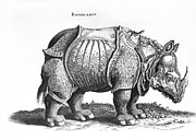 Rhinoceros Framed Prints - Rhinoceros no 76 from Historia Animalium by Conrad Gesner  Framed Print by Albrecht Durer