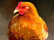 Red Art Posters - Rhode Island Red  Poster by Karen Sheltrown
