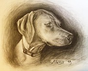 Dog Lover Drawings Framed Prints - Rhodesian Ridgeback Framed Print by Sun Cruise