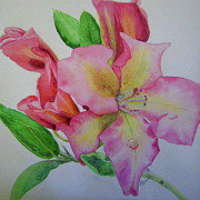 Lynn Quinn - Rhodie with Dew I