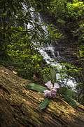 Mountain Paths Prints - Rhododendron at the Falls Print by Debra and Dave Vanderlaan