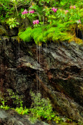 Original Photography Art - Rhododendron on Wet Cliff Blue Ridge by Dan Carmichael