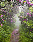 Rhododendron Time In North Carolina Print by Bill Swindaman