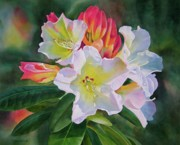 Realistic Watercolor Prints - Rhododendron with Red Buds Print by Sharon Freeman