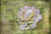 Judy Hall-Folde - Rhythm of Love