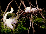 Nesting Photos - RHYTHM of NATURE by Karen Wiles