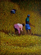 Marcello Martinho Painting Posters - Rice Crop In Nepal Poster by Marcello Martinho