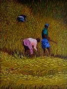 Marcello Martinho - Rice Crop In Nepal
