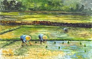 Workers Drawings Posters - Rice Paddy Field Poster by Carol Wisniewski