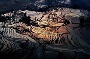 Reflection Harvest Digital Art Framed Prints - Rice terrace field of Yuan Yang Framed Print by Kim Pin Tan