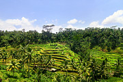 Lars Ruecker - Rice Terrace in Bali