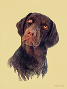Chocolate Lab Digital Art Posters - Rich Poster by Marina Likholat