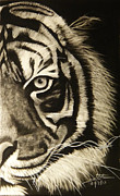 Animals Drawings - Richard Parker by Madhuri Koushik