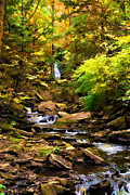 Fall Trees With Stream. Art - Ricketts Glen National Park by Elaine Walsh
