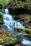 Scenery Digital Art Originals - Ricketts Glen Waterfall by Crystal Wightman