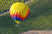 Grape Vineyards Prints - Ride over the Napa Valley Print by Bob Phillips