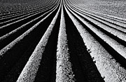 Shadows Photos - Ridge and Furrow by Tim Gainey